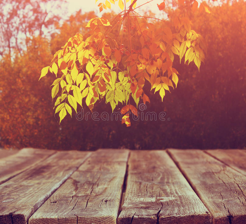 Image of front rustic wood boards and background of fall leaves in forest. royalty free stock image