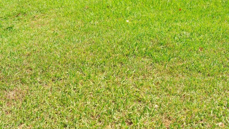 Grass in the garden. This image it is grass in the garden in Lisbon , Portugal royalty free stock photos