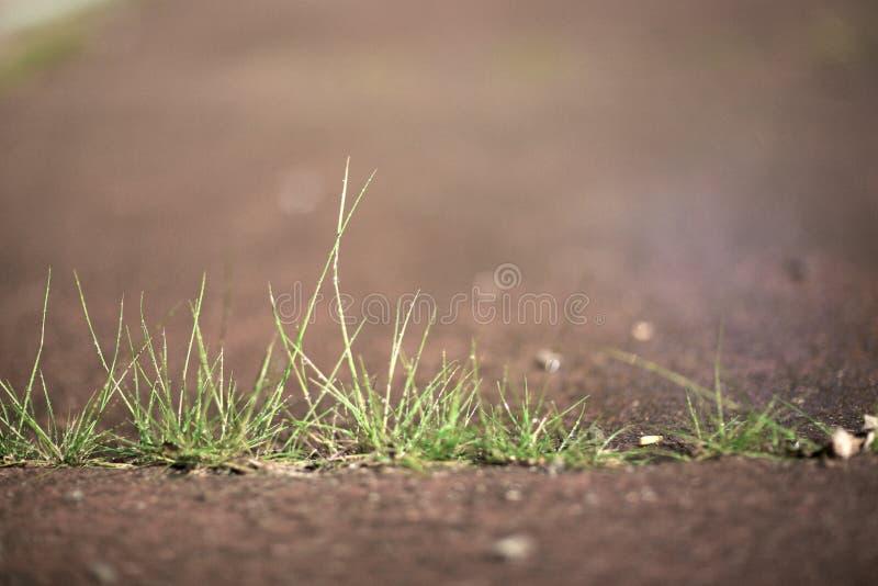 Grass Through Concrete Sidewalk 03 stock photo