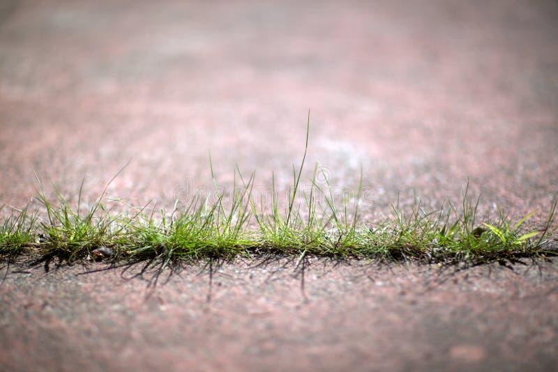 Grass Through Concrete Sidewalk 02 stock photography