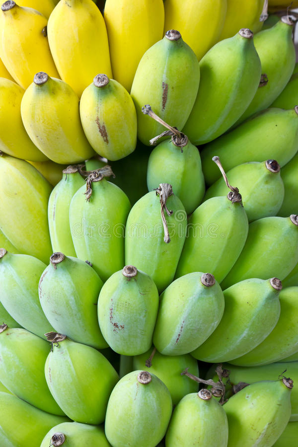 Download Green bananas stock image. Image of together, forest - 30274323