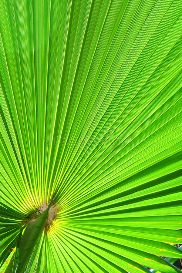 Download Image of green palm leaf stock photo. Image of summer - 19948034