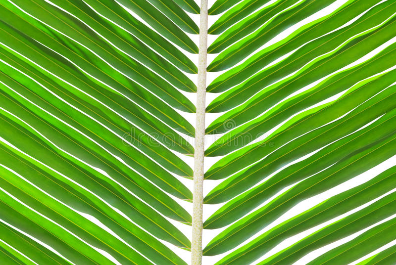 Green palm leaf for background.
