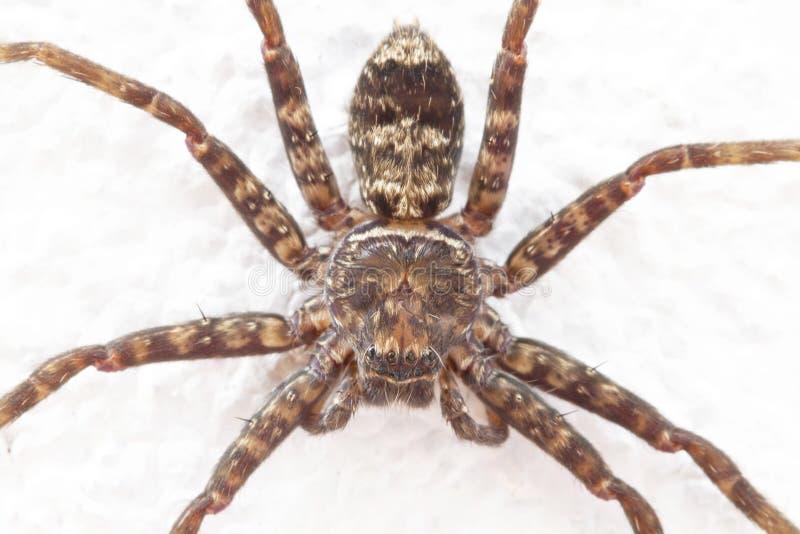 Image haute étroite d'araignée photos stock