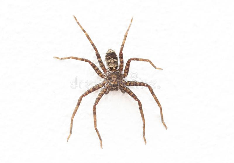 Image haute étroite d'araignée photo stock