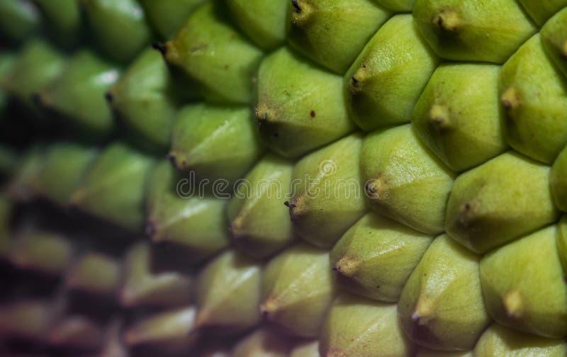 Image haute étroite d'une coquille de fruit de Jack photo stock
