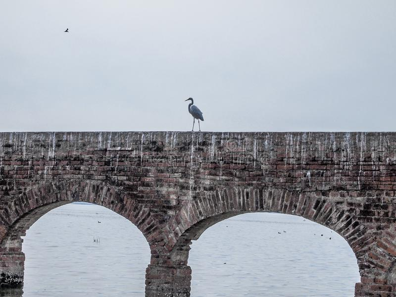 Image of a heron on a brick wall with arches in a river. With a gray sky in the state of Jalisco Mexico, copy space or space for text royalty free stock photo