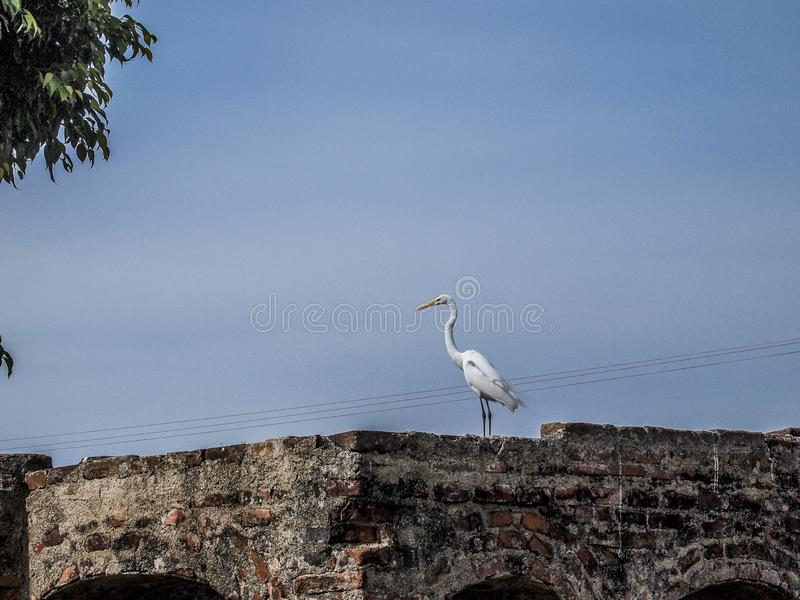 Image of a heron on a brick wall with a blue sky background. In the state of Jalisco Mexico royalty free stock image