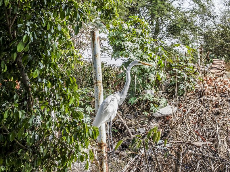 Image of a heron among green and dry underbrush next to a metal pole. On a wonderful sunny day in the state of Jalisco Mexico royalty free stock photo