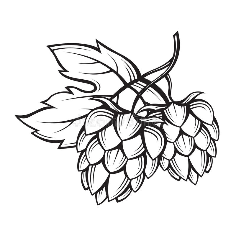 Image of hops. Black illustration of hops for brewing stock illustration