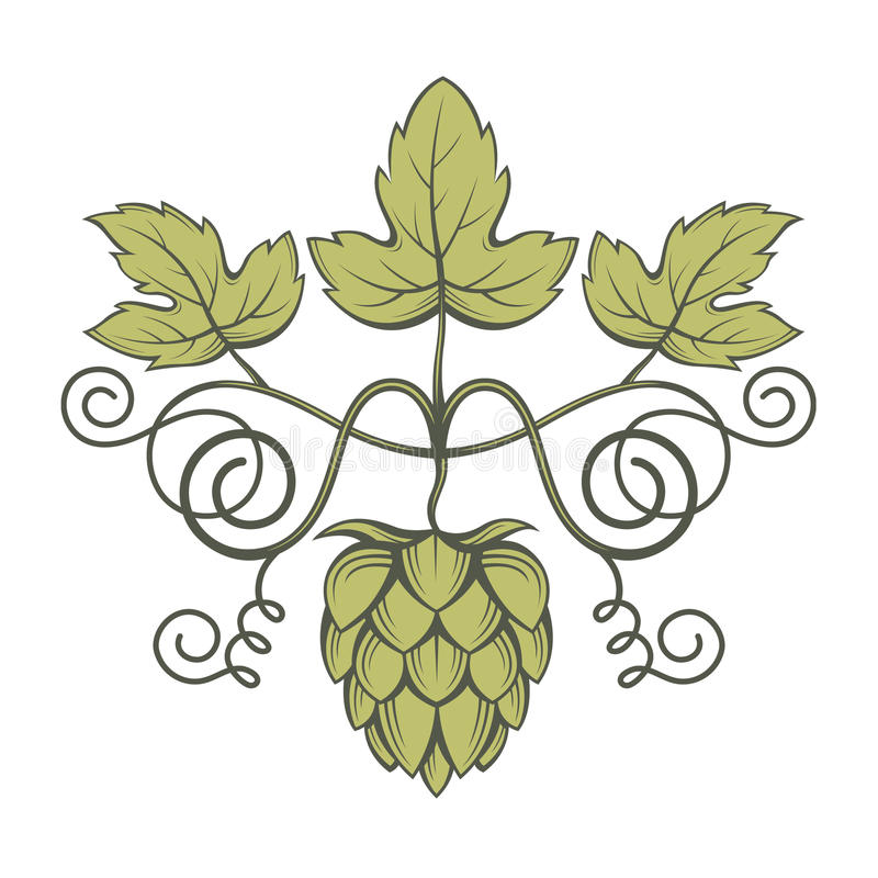Image of hops. Illustration of hops for brewing vector illustration