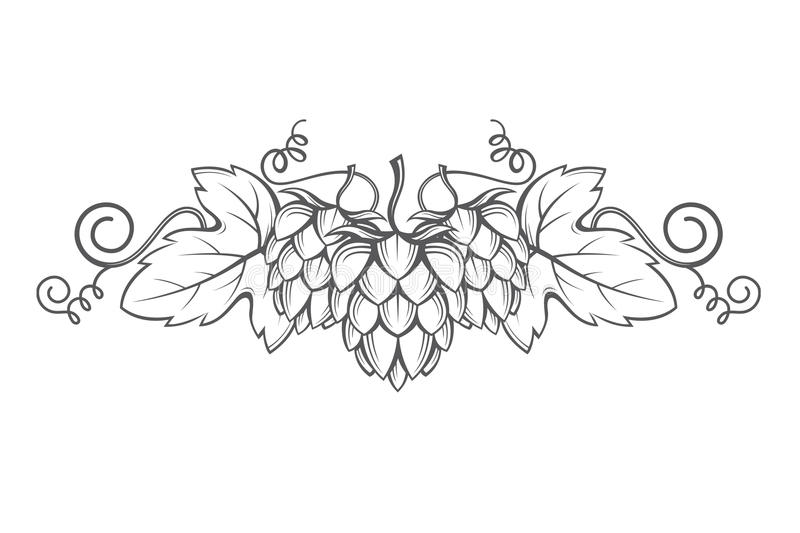 Image of hops. Illustration of hops for brewing royalty free illustration