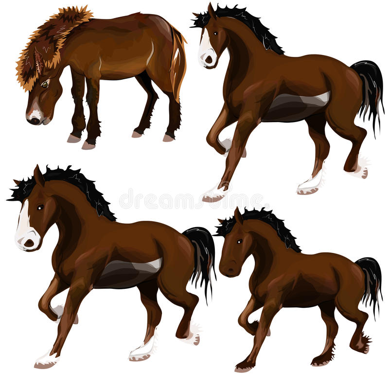 Image Of Horse. Stock Photography
