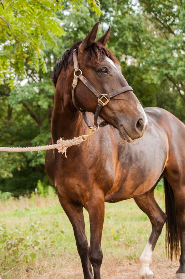 Horse full body shot royalty free stock photography