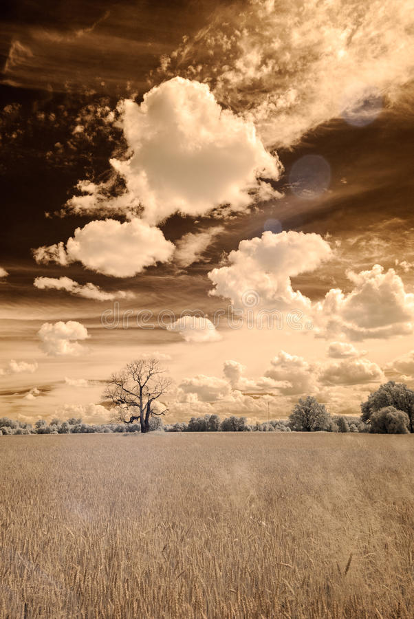 image infrarouge d'appareil-photo ouvrez les champs verts photographie stock libre de droits