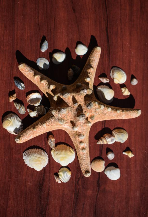 Image with a large sea star surrounded by many shells. Starfish on wood background. Elements of sea and ocean. Vacation memories royalty free stock photos