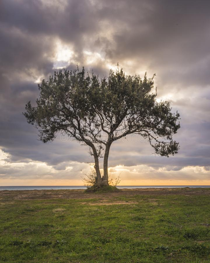 Image of a lone tree against a beach and a dramatic sky during sunset. 
