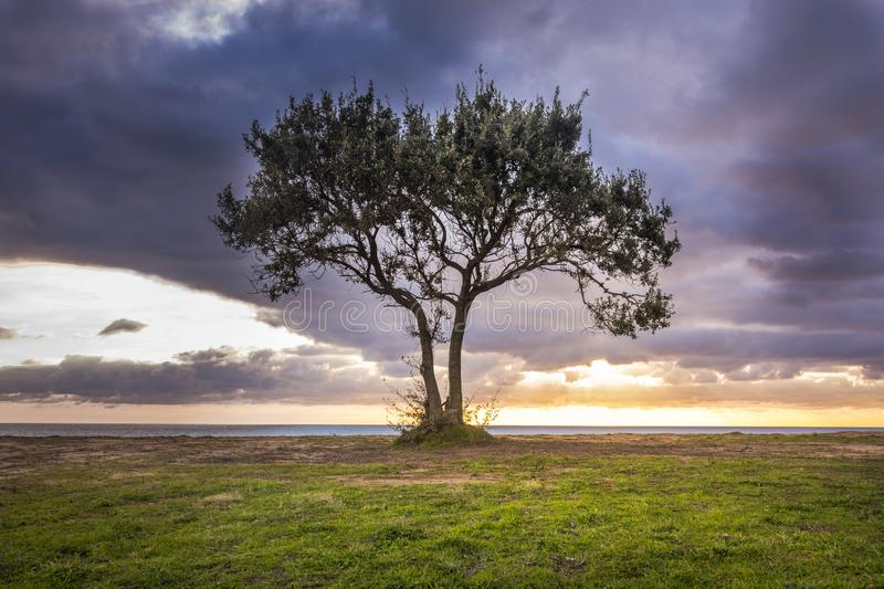 Image of a lone tree against a beach and a dramatic sky during sunset. .