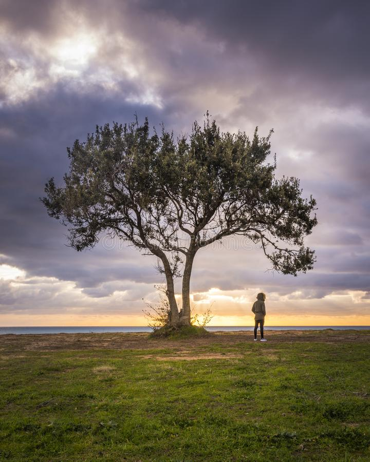 Image of a lone tree and a man against a beach and a dramatic sky during sunset. 