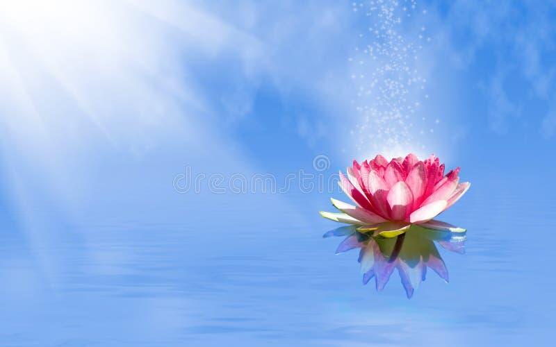 magic lotus flower on the water stock photos