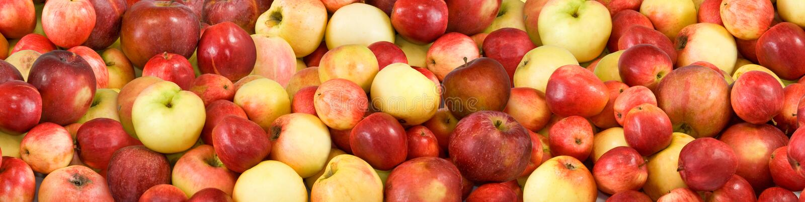 Image of many ripe apples. Closeup royalty free stock images