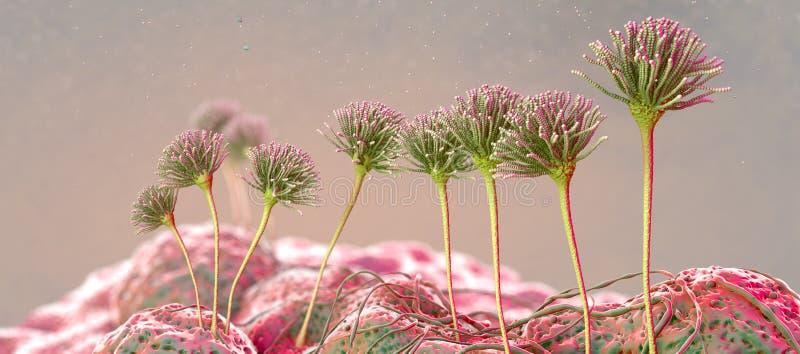 Image microscopique des moules ou le champignon et les spores de moule croissants illustration stock