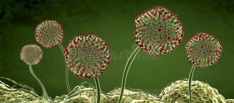 Image microscopique des moules ou le champignon et les spores de moule croissants illustration libre de droits