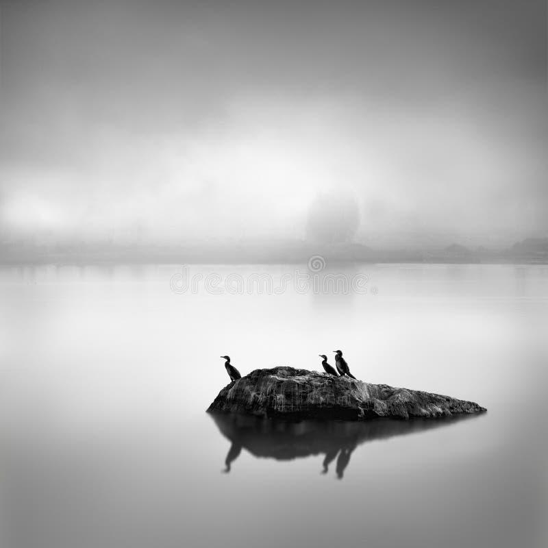 Image minimale et noire et blanche des usines et oiseau dans la région du lac Gripsholm images stock