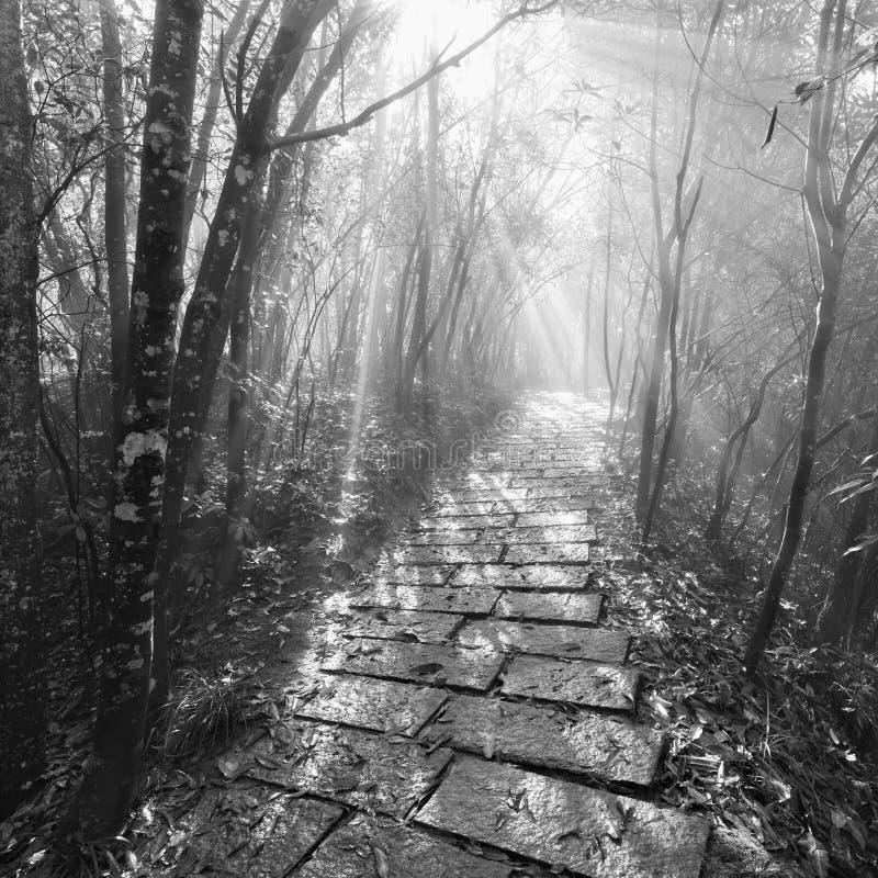 Image monochrome du chemin en pierre humide à Zhangjiajie Forest Park image libre de droits