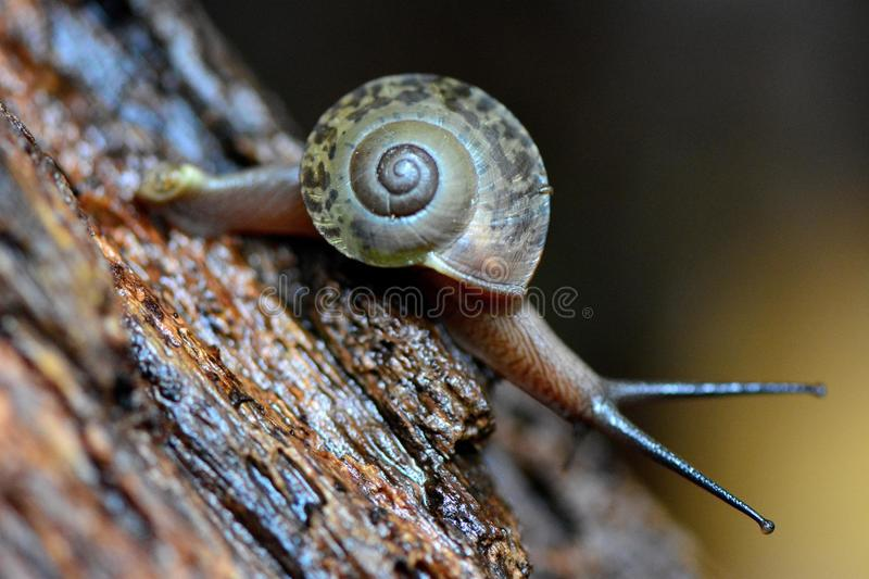 The big world snail stock photography