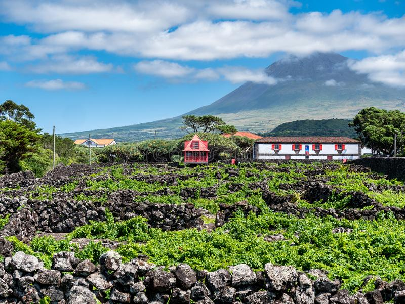 Image of mountain pico with houses and vineyard on the island of pico azores. Image of mountain pico in clouds with houses and vineyard on the island of pico royalty free stock image