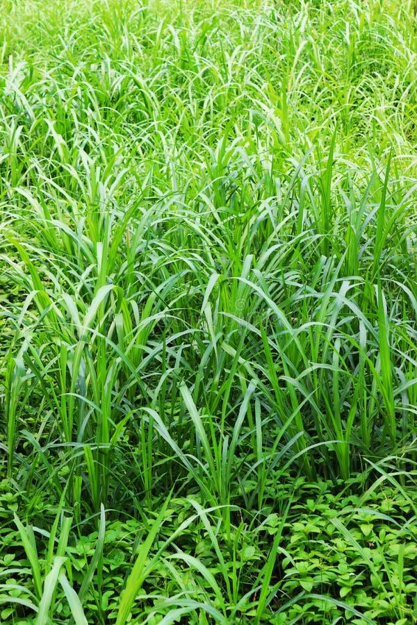 Image naturelle de feuille verte For?t et arbre vert de jungle Beau paysage naturel Jungles tropicales profondes Autumn Landscape image stock