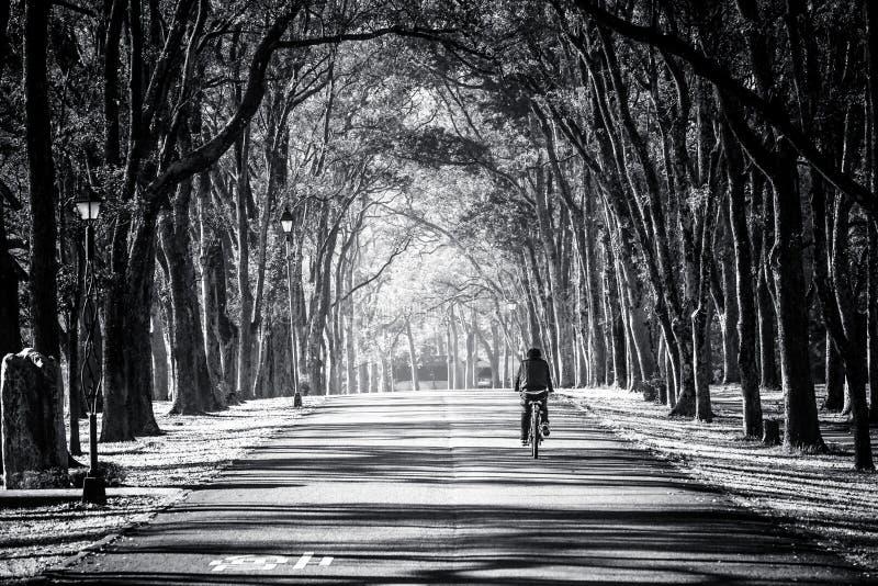 Image noire et blanche d'un cavalier de bicyclette suivant la route photos stock