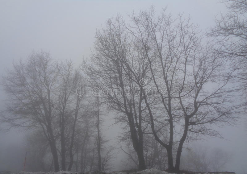 Bare Oak Trees - Quercus in Thick Fog. Image of Oak trees in thick fog on a cold wet winter afternoon. The feeling is bleak and the mood is serious and somber royalty free stock photography