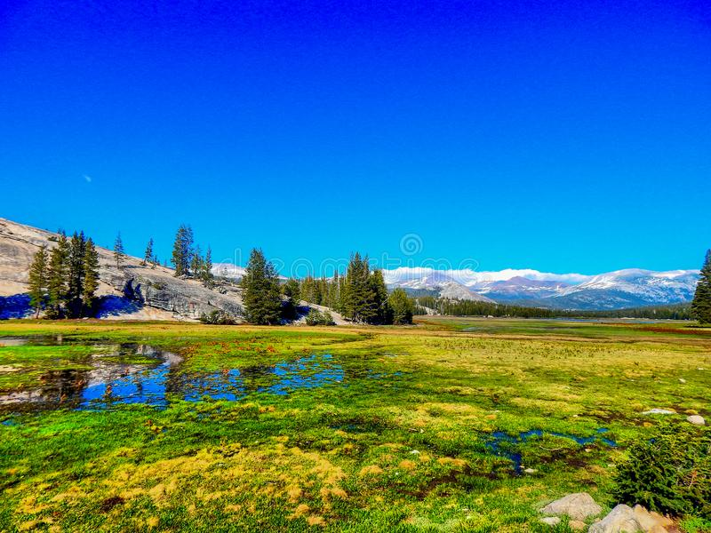The Meadows in Tioga Pass. An image of one of the meadows passing through Tioga Pass in Yosemite National Park stock photography