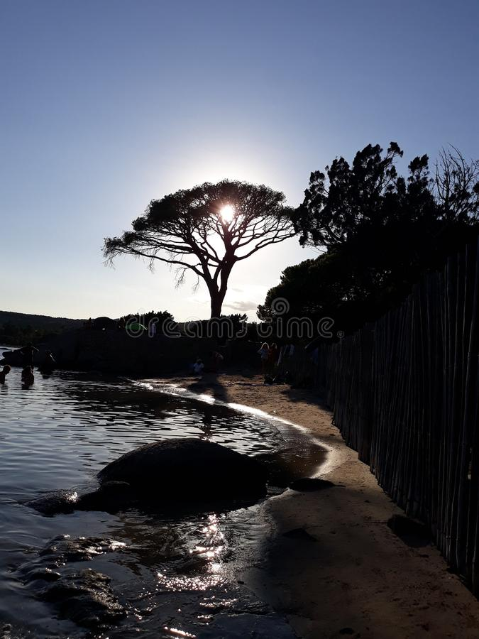 Sea , tree and sun. This image is one of my favourite picture royalty free stock photography