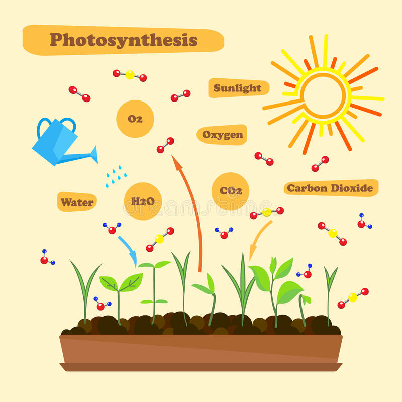 Image of photosynthesis stock illustration