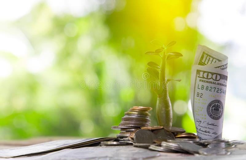 Image of pile of coins and bank notes rolled with plant on top f stock image