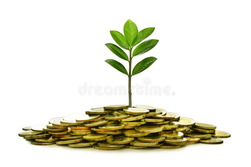 Image of pile of coins with plant on top for business, saving, growth, economic concept stock images