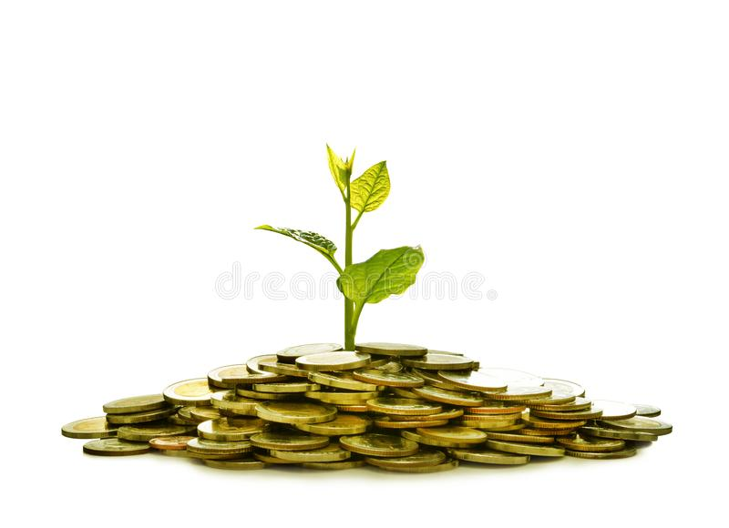 Image of pile of coins with plant on top for business, saving, growth, economic concept. Isolated on white background stock images