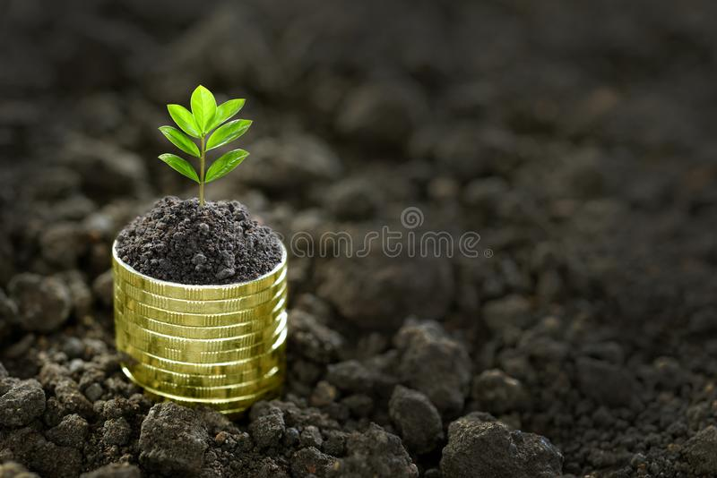 Pile of coins with plant on top royalty free stock photo