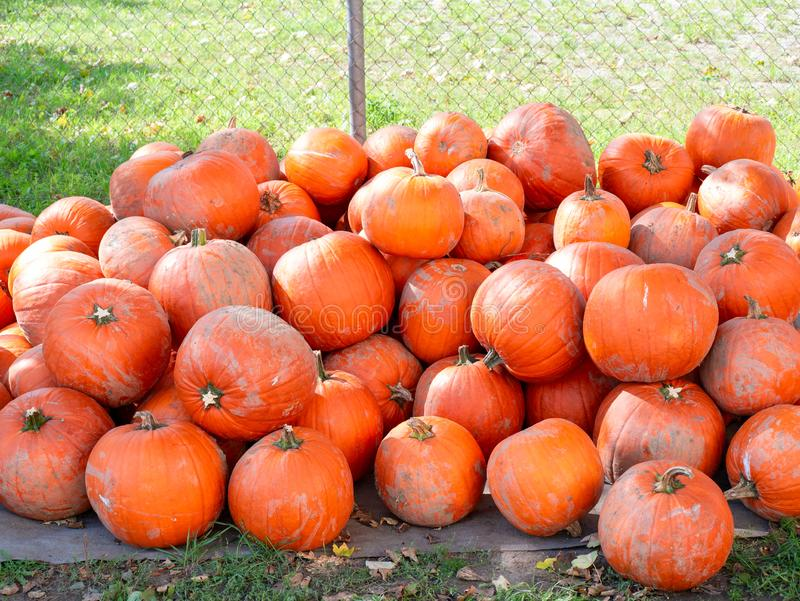 Image of a pile of dirty orange pumpkins stock photos