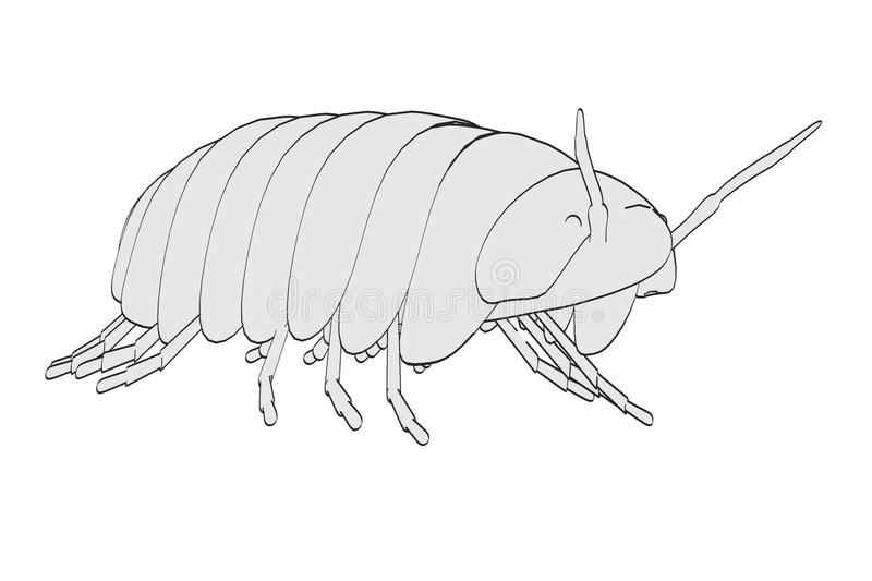 Image of pill bug. Cartoon image of pill bug vector illustration