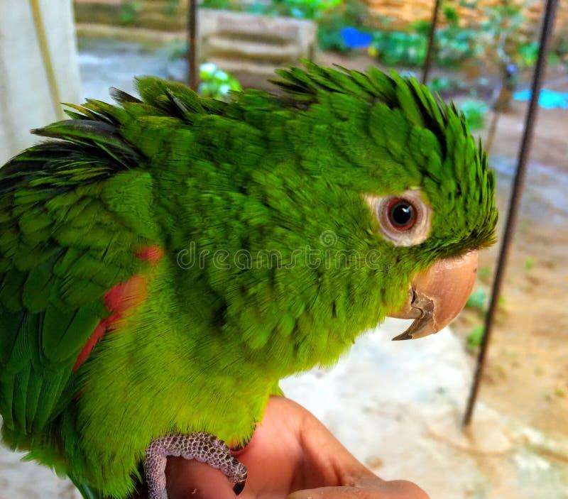 Brazilian animal diversity stock image