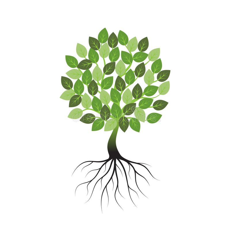 Green tree with roots an icon on a white background. stock illustration