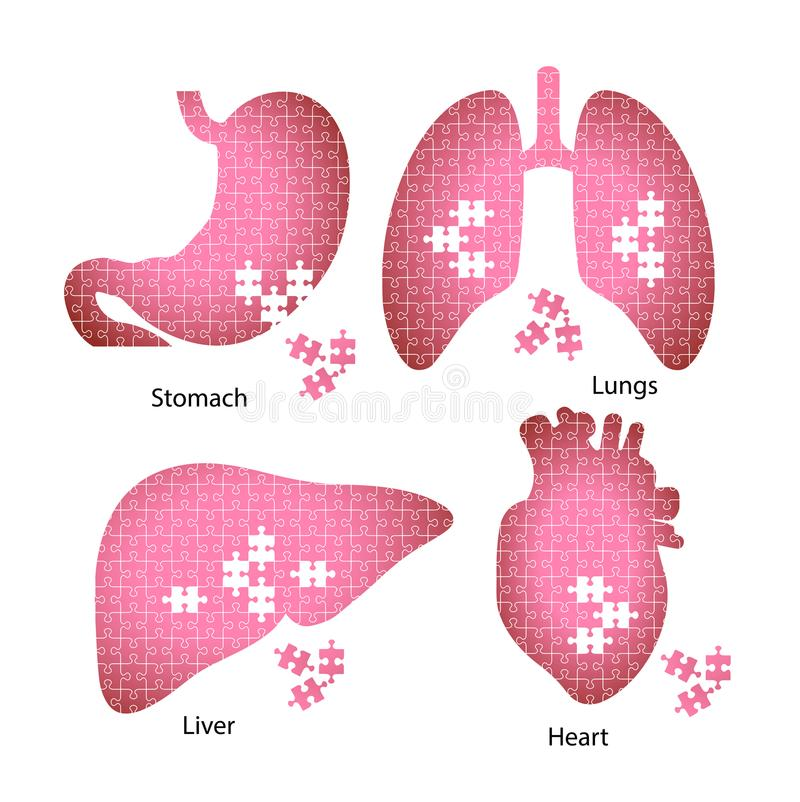Icons of the internal organs of man from puzzles symbolizing the download icons of the internal organs of man from puzzles symbolizing the stock vector illustration ccuart Images