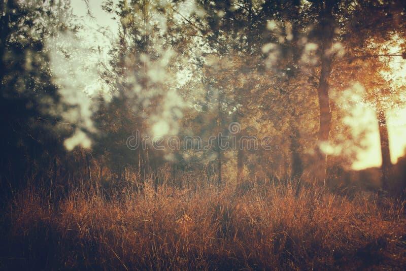 image rêveuse automnale abstraite de forêt à la lumière de coucher du soleil images libres de droits