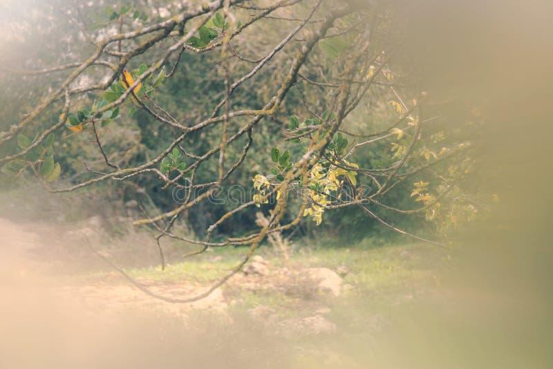 image rêveuse automnale abstraite et surréaliste de forêt photo stock
