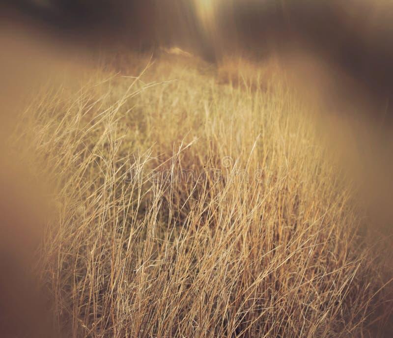 image rêveuse automnale abstraite et surréaliste de forêt images libres de droits