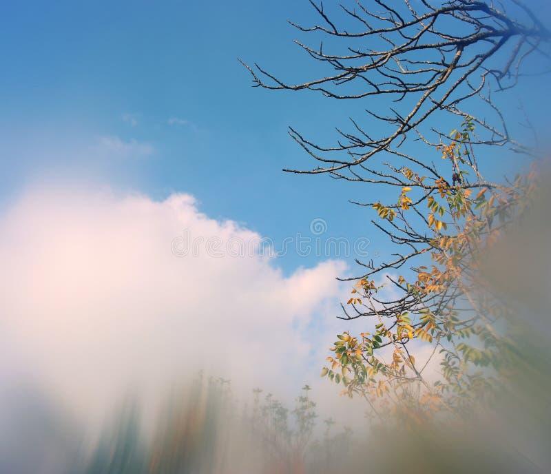 image rêveuse automnale abstraite et surréaliste des branches nues à la forêt, contre le ciel photos stock